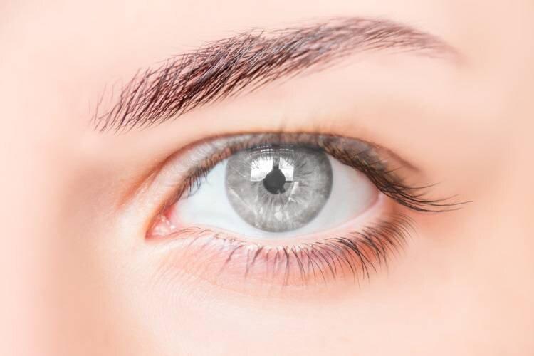 دانشمندان از اولین مراحل شکل گیری بینایی پرده برداشتند
