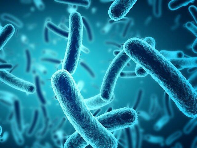 نابودی باکتری های مقاوم در برابر دارو با ویروس های مهندسی شده