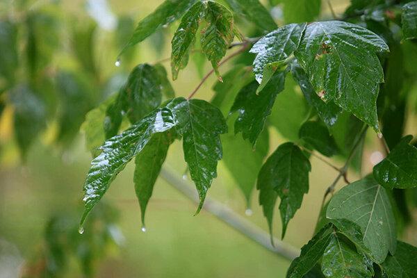 رگبار باران در شمال غرب و جنوب شرق ، افزایش دما در پایتخت