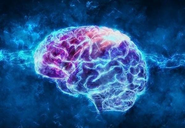 تهیه نقشه سه بعدی مغز به وسیله محققان گوگل و هاروارد
